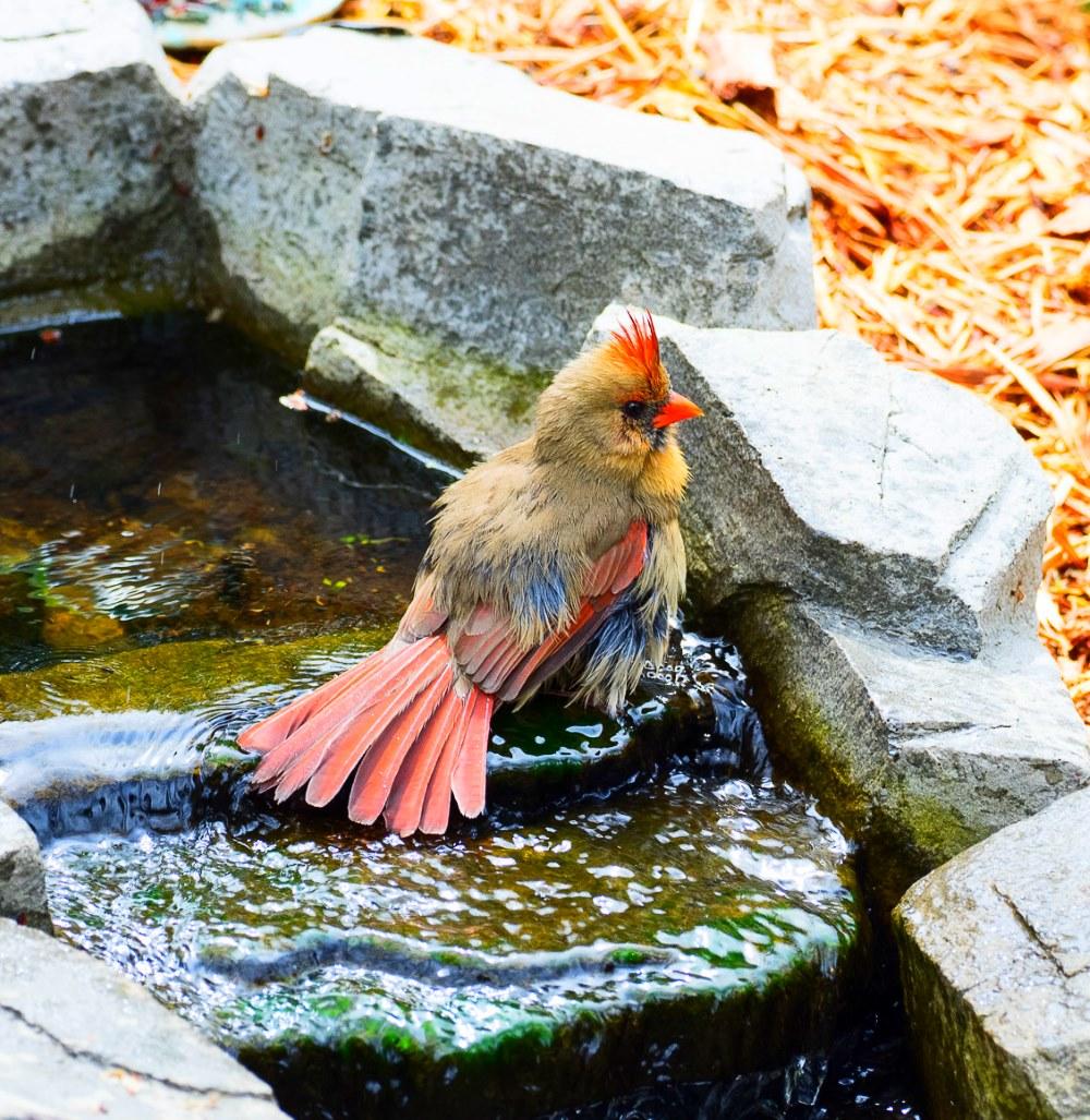 Cardinal ycb