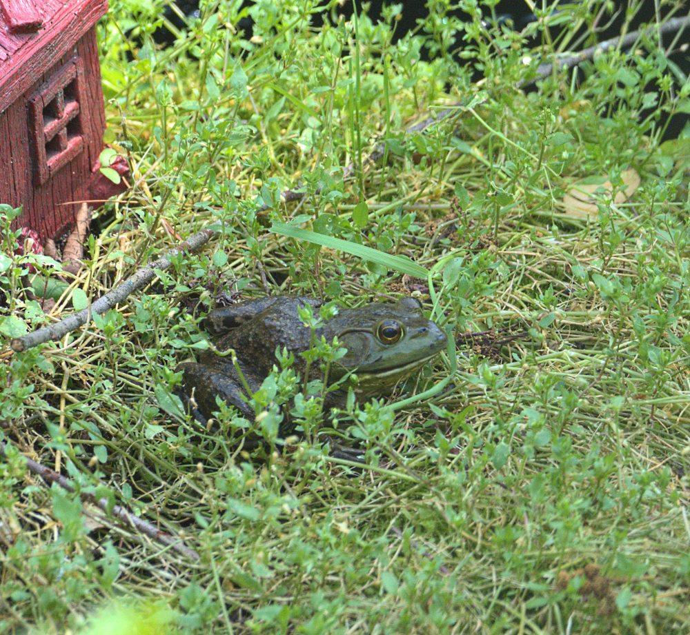 Frog10002
