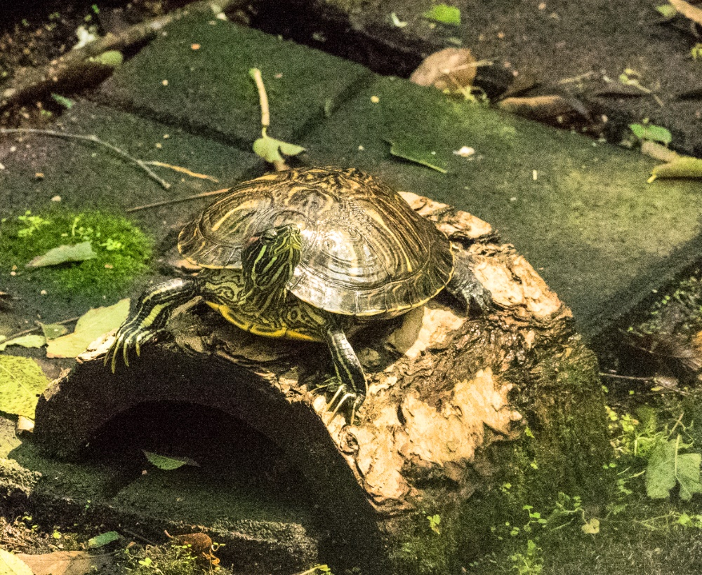 Turtle (1 of 1)-41000
