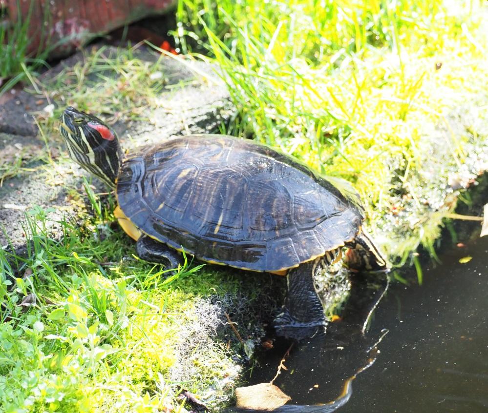 Turtle1tp