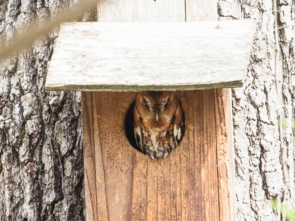 Owl TP