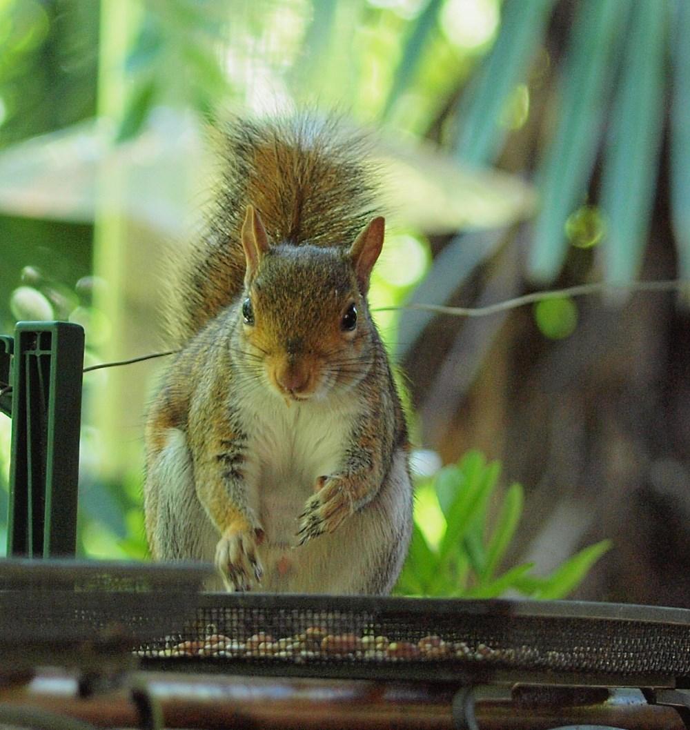 Squirrel2tp