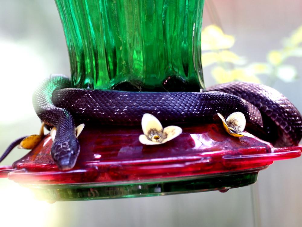 Snake1000
